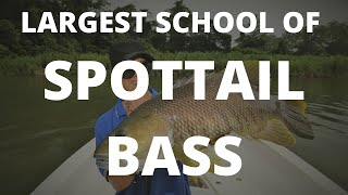 LARGEST SCHOOL OF PNG SPOTTAIL BASS EVER CAUGHT ON TAPE!
