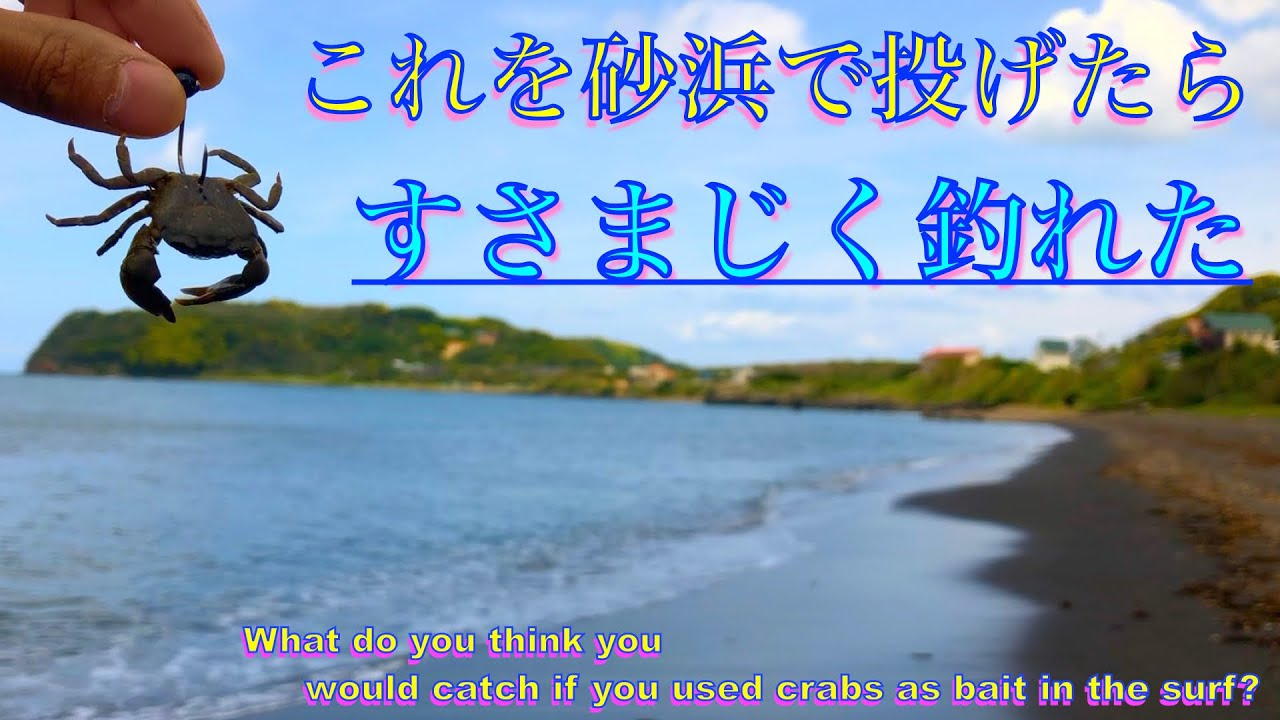 捕まえたカニを餌にサーフで釣りしたら大物が爆釣してすごかった【Surf Fishing with Crabs】
