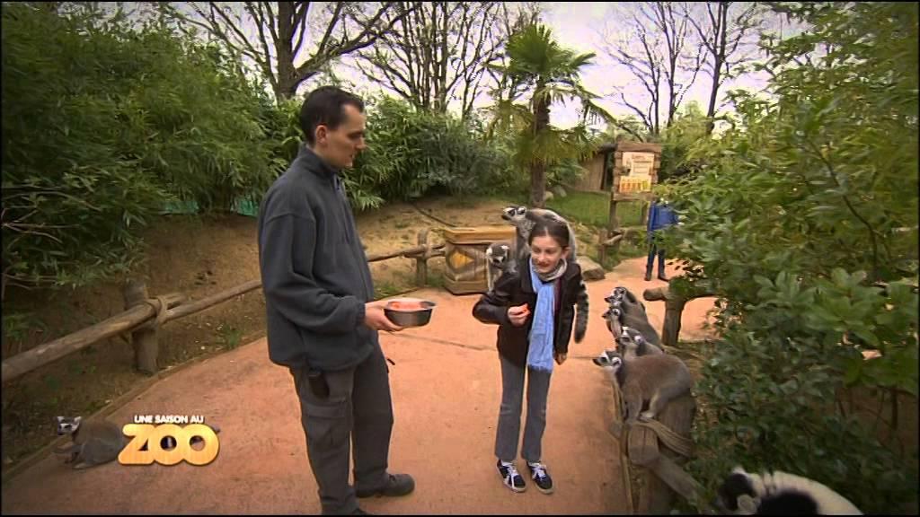 Download Une Saison Au Zoo - Hippopotame, bébés boas et lémuriens (S1 Ep03)