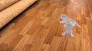 Котята делают свои первые шаги / Kittens take their first steps