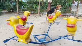 Puppy Rides Merry-go-round