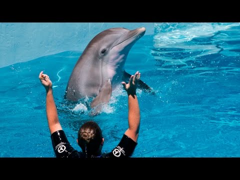 Florida Travel: A Tale of Inspiration & Hope at the Clearwater Marine Aquarium