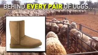 The Ugly Truth Behind UGGs