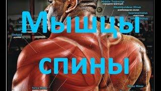 Мышцы спины | Анатомия | Back muscles | Anatomy
