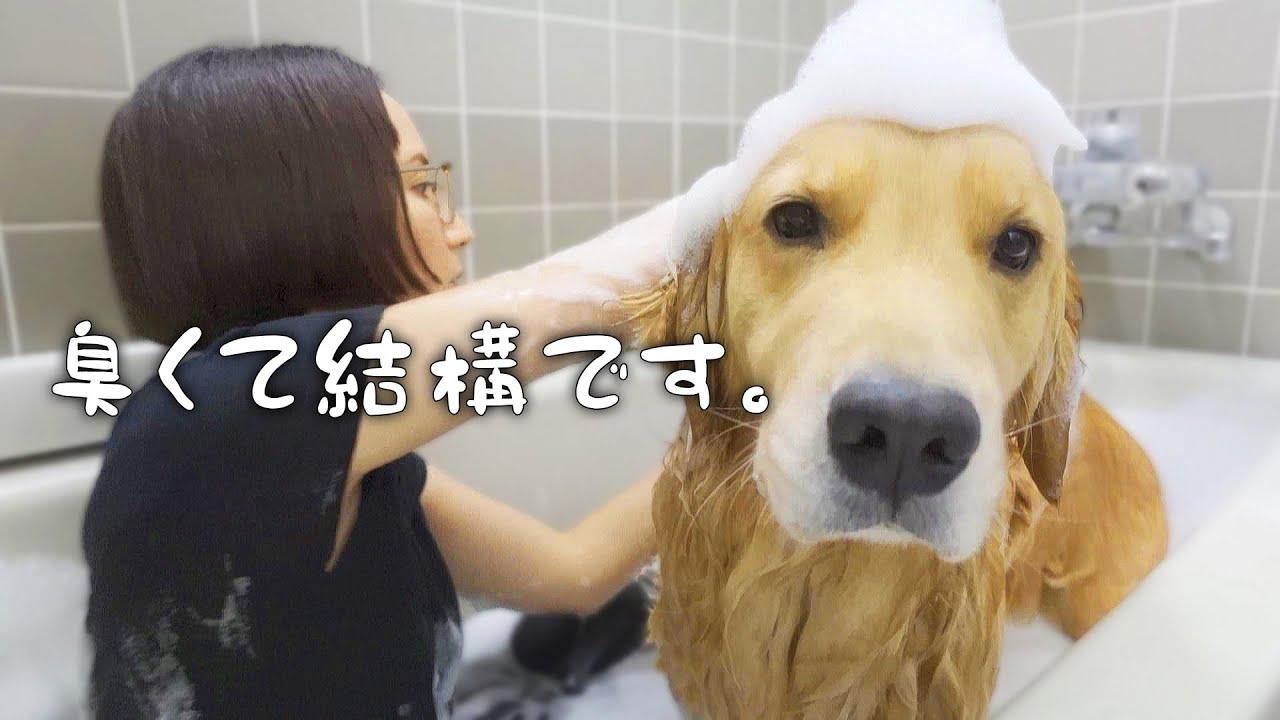 正直お風呂はいい迷惑だと思っている愛犬