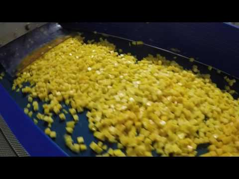 Mango Chilling, Dicing, IQF Processing Line by Innotec Systems BV