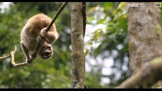 Menikmati Cerminan Surga Suaka Marga Satwa Gunung Sawal Ciamis - Indonesia Bagus