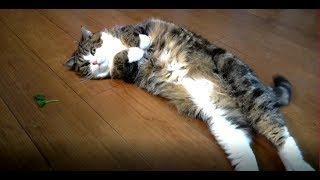 キャットニップとねこ。-The catnip and Maru&Hana.-