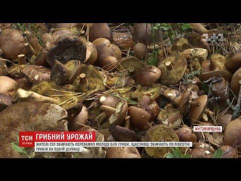 На Житомирщині люди
