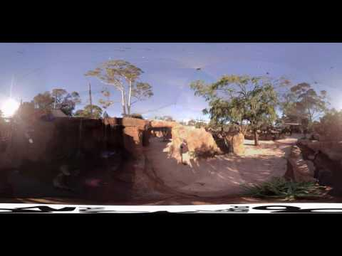 360˚ tour of our new African savannah lovebird aviary