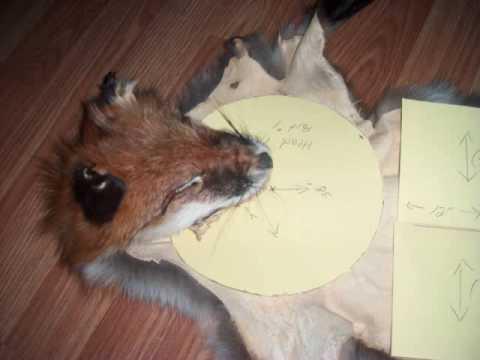 making of the FOX hide hat.wmv - YouTube 7d4ada41560