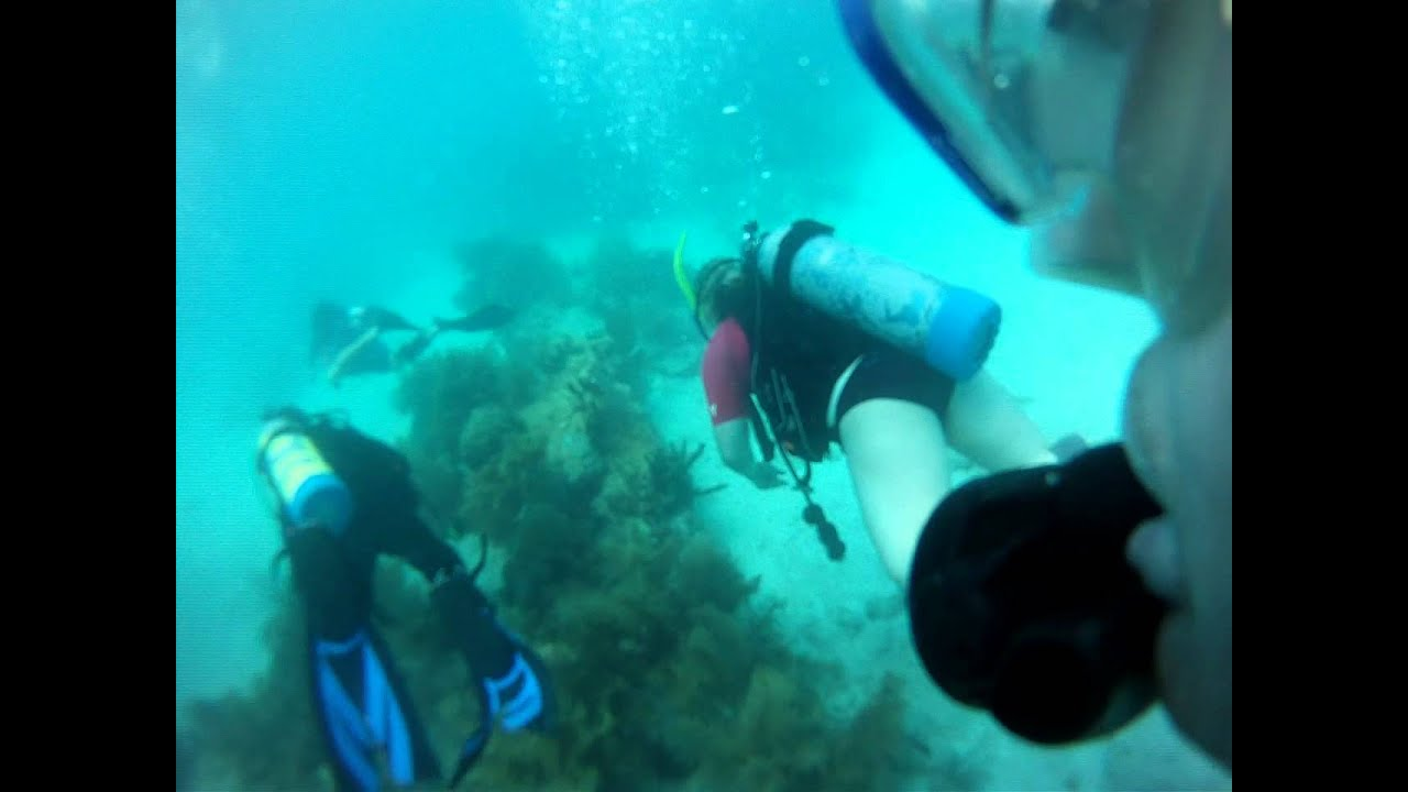 Scuba Diving Looe Key Reef In Florida Keys