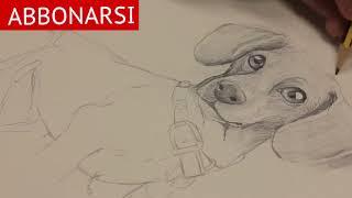 Come Disegnare Un Cane Lupo