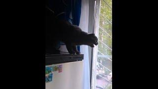 Кошка орет на муху.