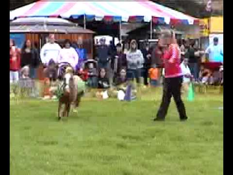 Dog & Pony Show - Busy Bee Dogs