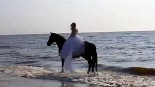 Красивые девушки и лошади на Белом море