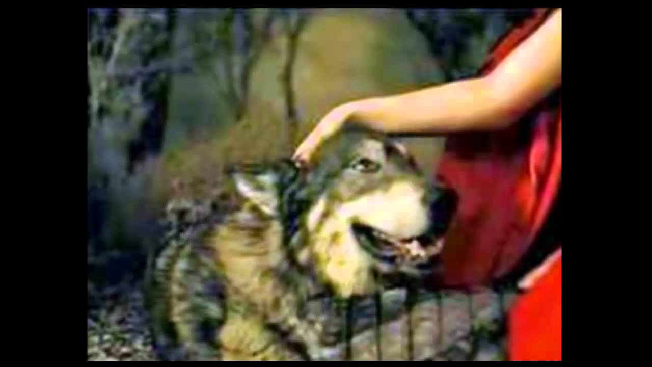 Lobos Solitario Frases Chidas Www Miifotos Com