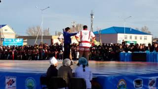 Соревнования по борьбе казак куреси в ВКО Altaynews.kz