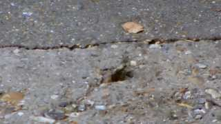 Mouse Living in Concrete