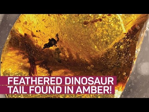 Feathered dinosaur tail found preserved in amber
