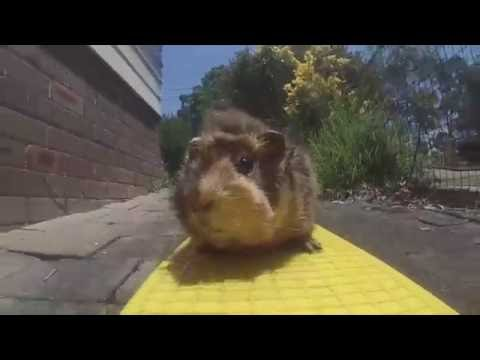The Guinea Pig Movie