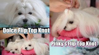 Grooming:  Dolce Flip Top Knot Tutorial ~~ Maltese Grooming ~ Top Knot Flipped