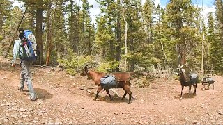 Goats & Dogs Bąckpacking to an Emerald Green Alpine Lake For Catch & Firebox Cook ASMR Camping