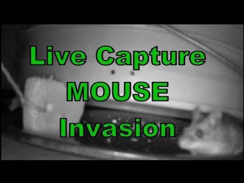 Live Mouse Capture