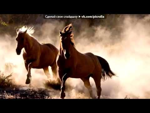 Трогательные фото лошадей под музыку