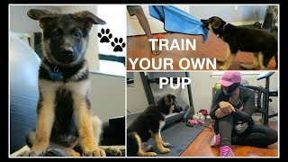 I TRAINED MY 10 WEEK OLD GERMAN SHEPHERD PUPPY IN ONE WEEK- SMART DOG UPDATE