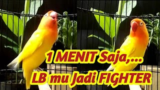 Download lagu Lovebird ini PINTAR Men-TRIGGER Lawan, Labet yang dengar Langsung Terbakar Emosi dan GACOR Seketika