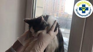 У Котика Лишай это Заболевание Поддающиеся Лечению. Заболевание Не Является Смертельно Опасным