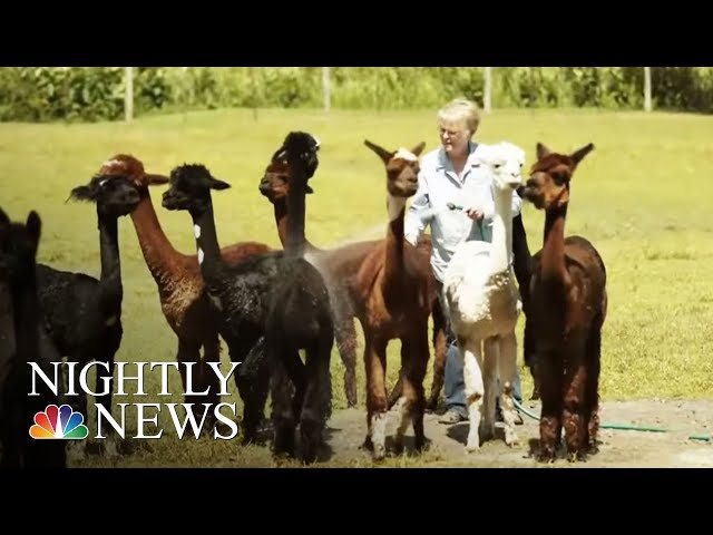 Hobby Farming On The Rise, Especially Among Retirees | NBC Nightly News