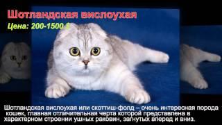 Самые дорогие и красивые кошки мира!