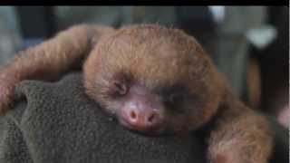 Забавно видео: Cutest Animals On Planet Earth - 2013 Compilation