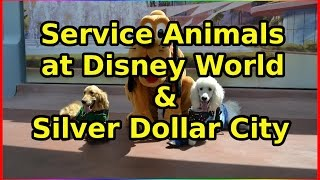 service dogs at disney and silver dollar city ep 56 confessions of a theme park worker