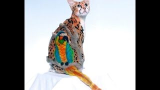 Супер модные стрижки кошек / Super trendy haircut cats