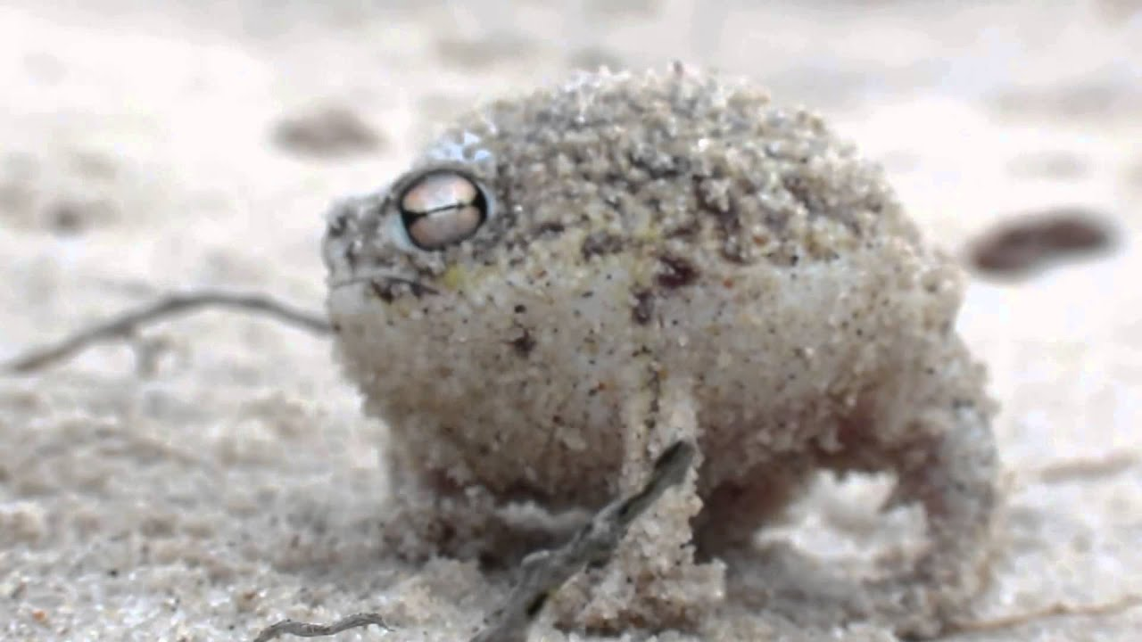 Worlds cutest turtle