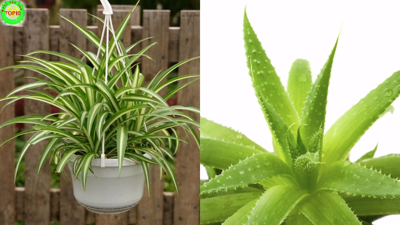 Perfect NASA Recommends Having These Plants In Your House To Purify The Air And  Other Amazing Reasons!!!