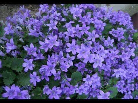 🍂Осенние покупочки растений 💁🏻♀️ разноцветные гейхеры , кмпанула  для сада