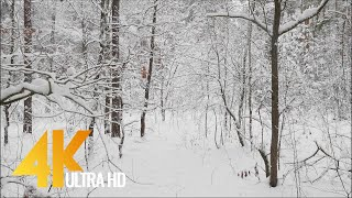Winter Forest, Ukraine - 4K (Ultra HD) Relaxation Video with Music. Walking and Aerial Shots in 4K