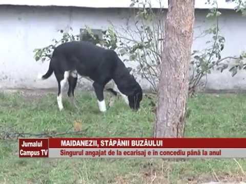 Download MAIDANEZII STAPANII BUZAULUI