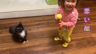 銃のオモチャを手に入れ悪巧みをする娘からそっと離れる猫と真っ向から立ち向かう猫 ノルウェージャン&ラガマフィン A cat running away from a clumsy daughter