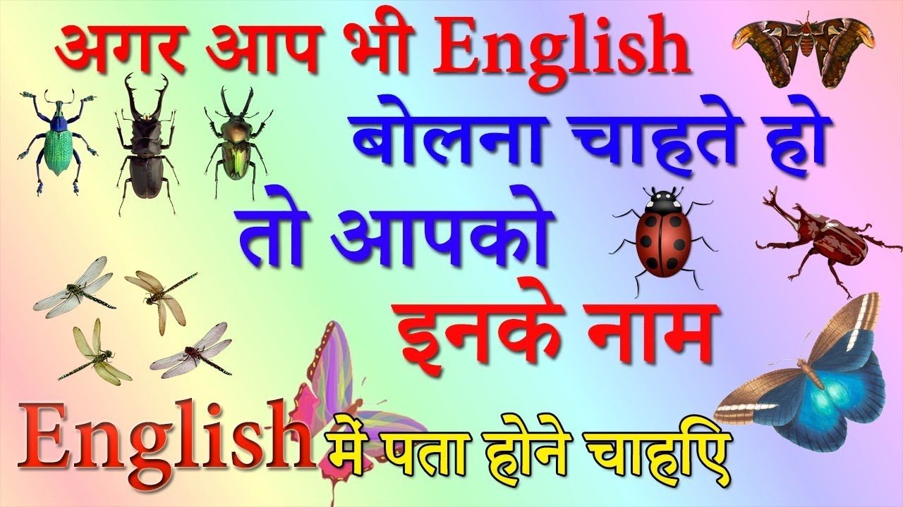 Common Insect Names | Daily use insect | Hindi meaning of common Insects |  Improve your Vocabulary |