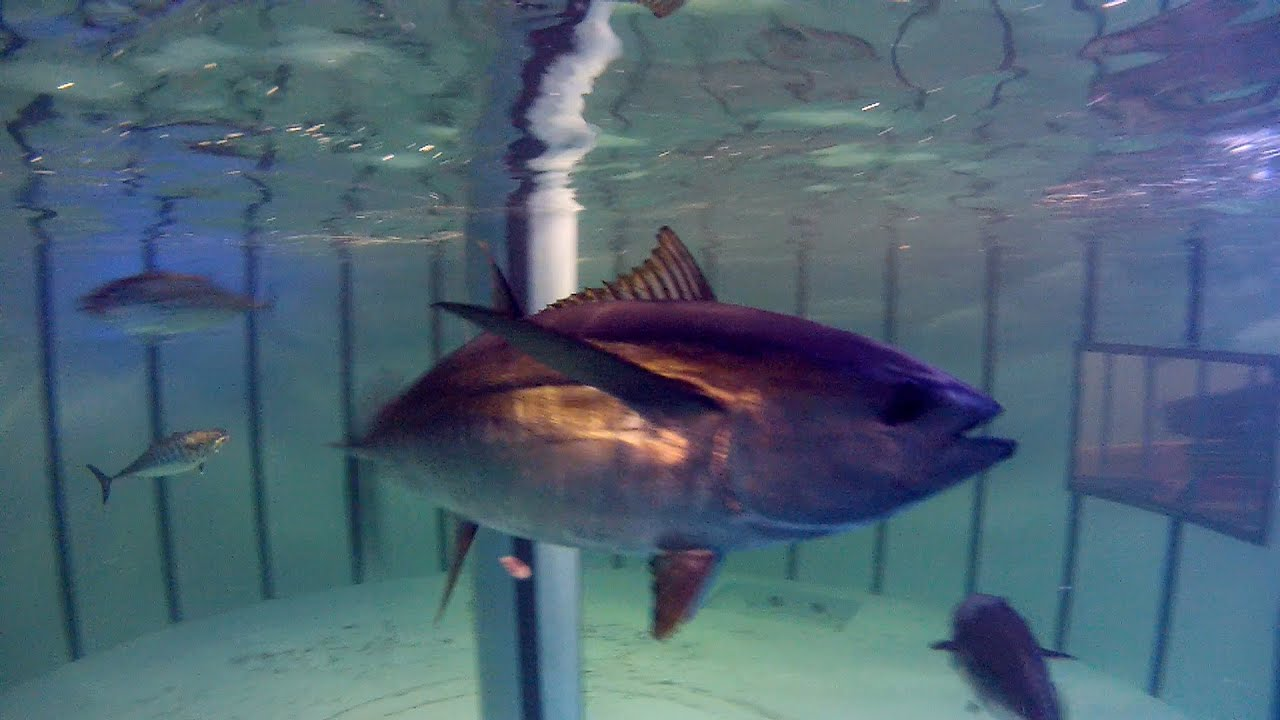 Learn about fish and their eating habits at VIMS