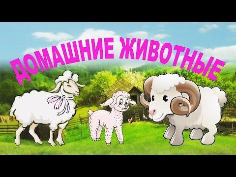 Мультик познавалка. Домашние животные для детей. Название и голоса домашних животных и их детенышей.