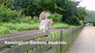 Kensington Gardens Squirrels London