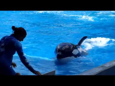 Show Shamu (Seaworld) 02 Travel Video
