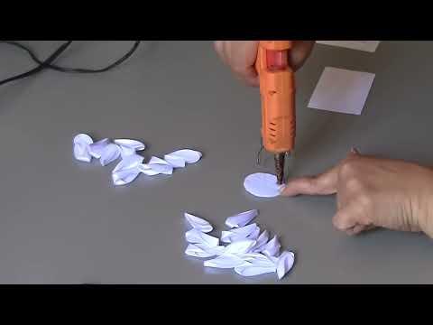 Цветок маргаритка многолетняя: выращивание из семян. Виды