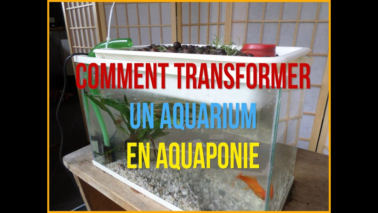 Aquaponie pratique: comment transformer un aquarium en aquaponie ...